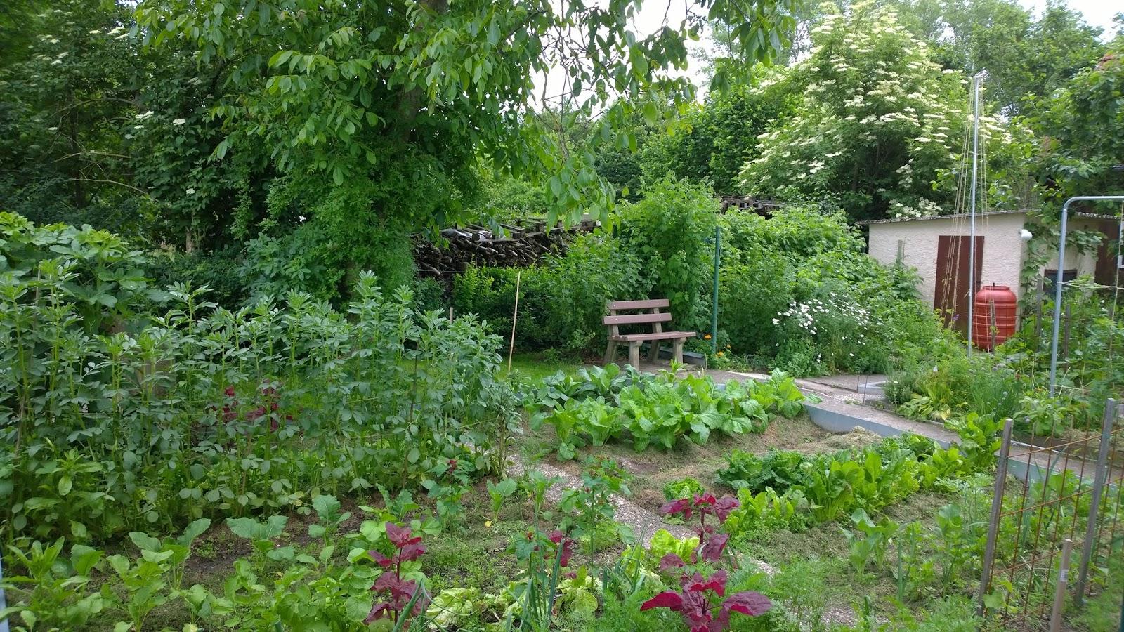 Der Gemüse-Selbstversorgergarten - Achims Garten zum Essen