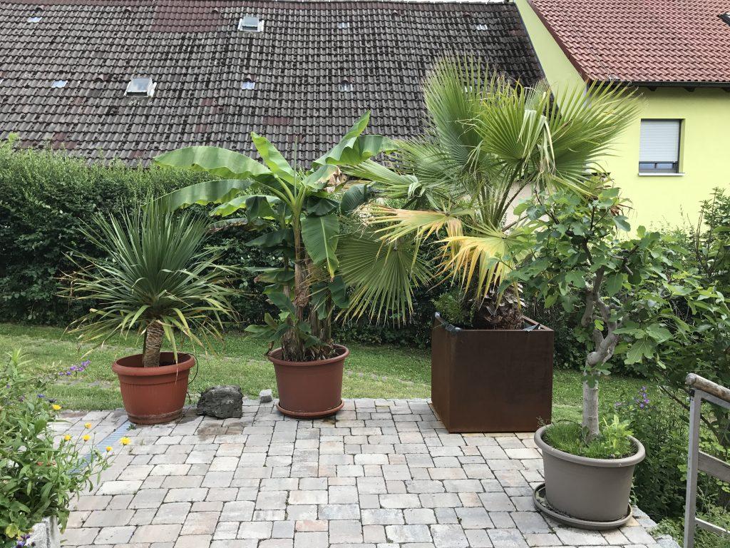 Kübelpflanzen auf der Hausterrasse