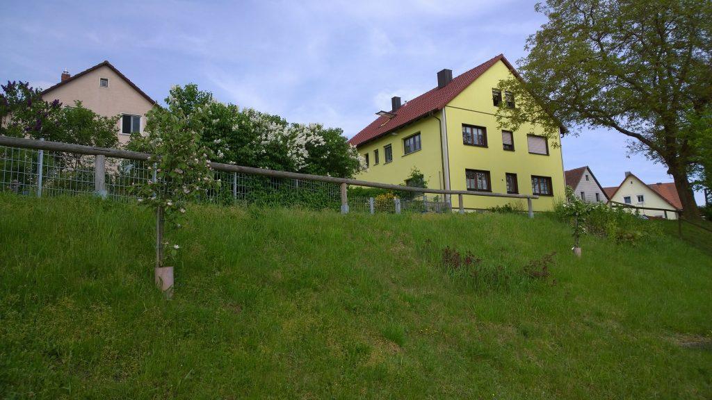 Hang mit Quittenbäumen vor unserem Grundstück